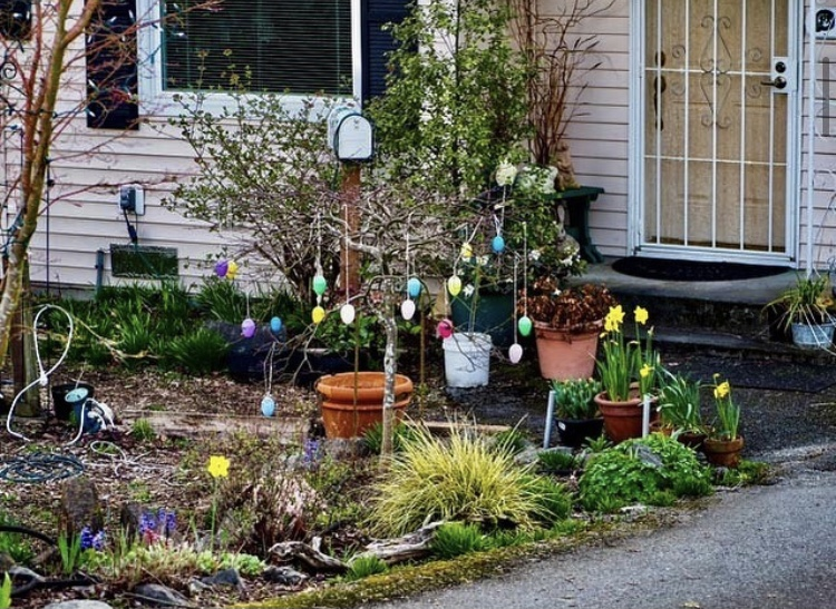 Plastic Easter eggs in multiple colors hang from a small leafless tree along a front yard pathway.